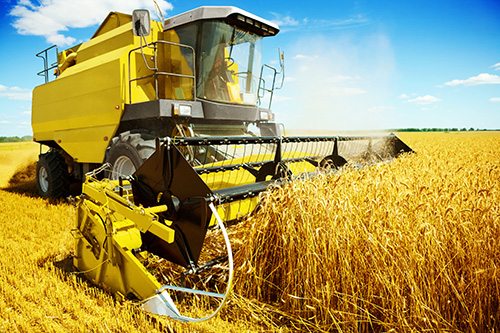 combine harvester collecting wheat